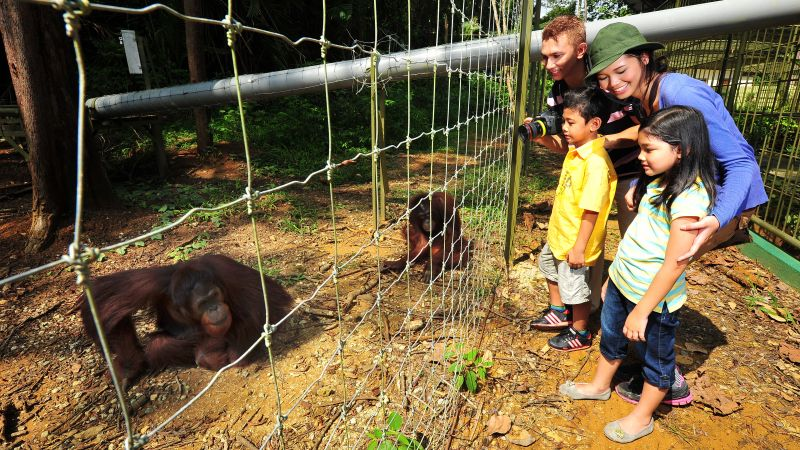 Orangutan and Charcoal Factory Tour From Penang W/ Lunch
