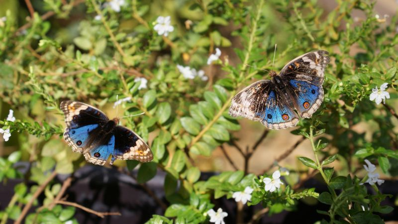 Entopia Discovery Tour from Penang