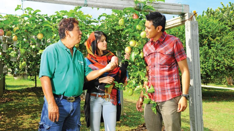 Penang Tropical Fruit Farm Tour