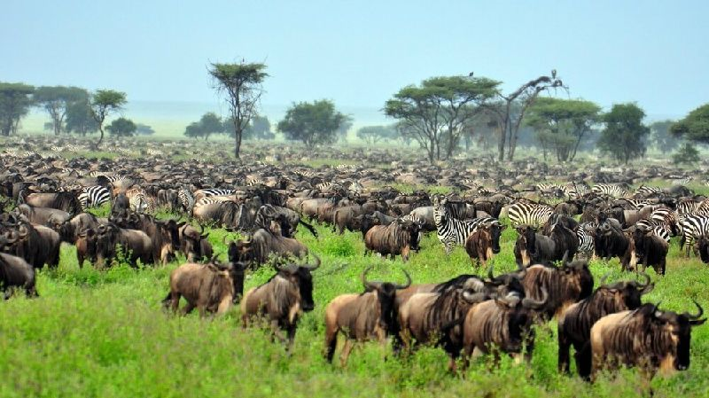Image of 10-Day Serengeti Migration Safari