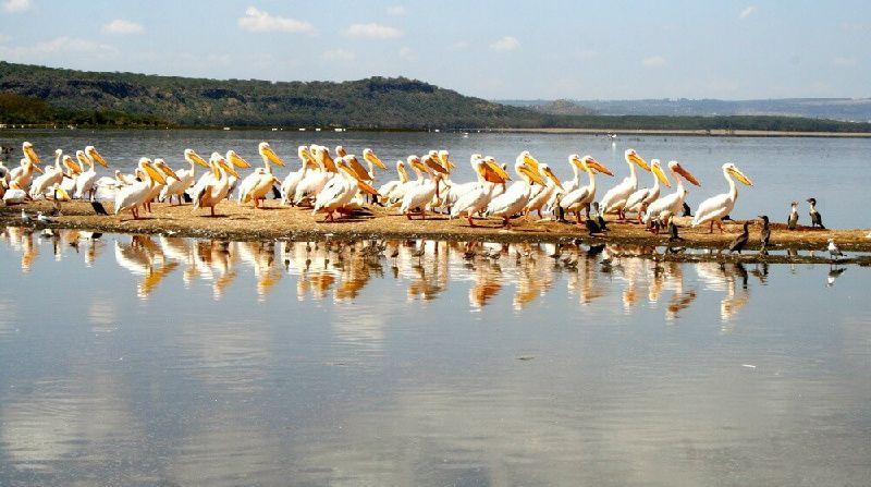 Lake Nakuru National Park Tour
