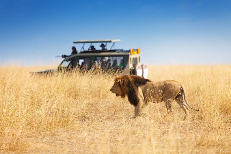 3-Day Masai Mara Budget Tour