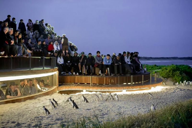 Phillip Island Day Tour from Melbourne