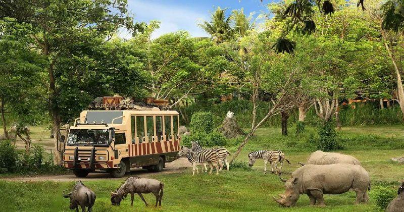 1-Day Bali Safari and Marine Park Rhino Ticket