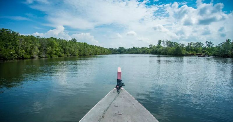1-Day Mangrove River Tour