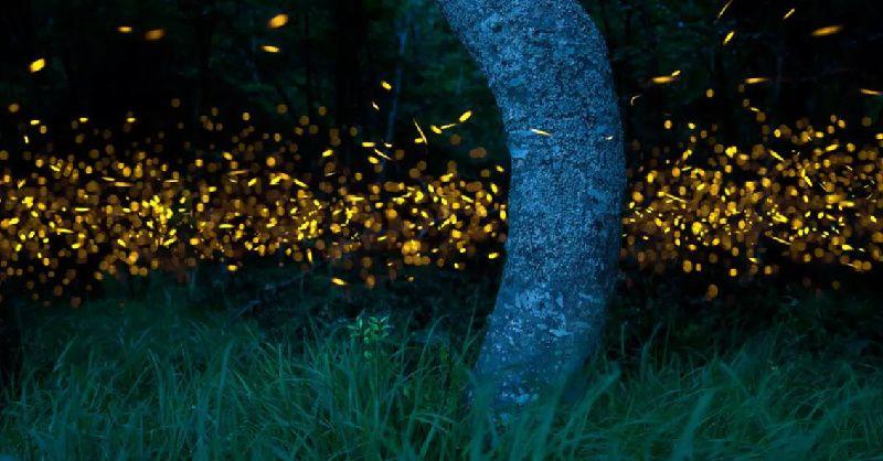 Klias River Fireflies Safari Cruise Tour