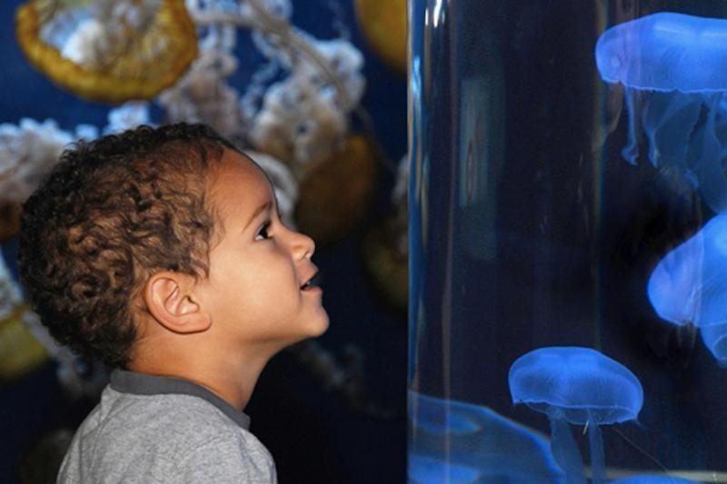 1-Day Aquarium of the Bay Trip