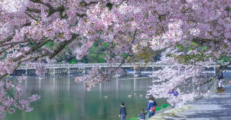 Arashiyama and Nara Todai-ji Day Tour from Osaka