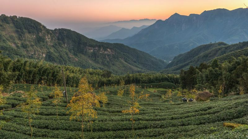 2-Day Private Tea Tour in Taiwan