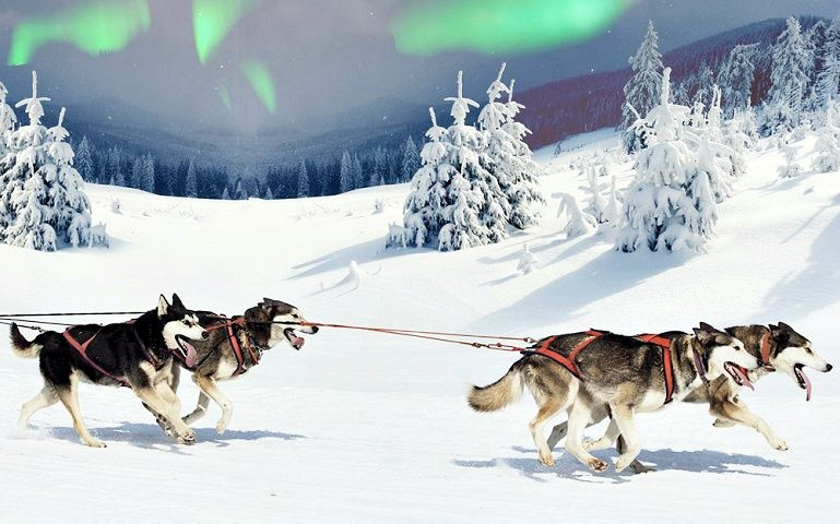 Lapland Northern Lights Hunt + Husky Sleigh Ride from Rovaniemi