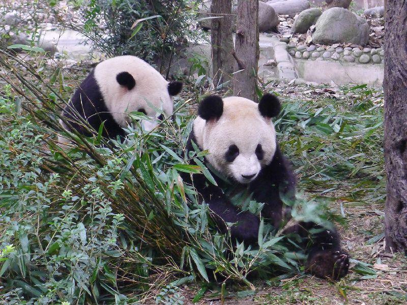 9-Day China Tour to Beijing - Xian - Chengdu