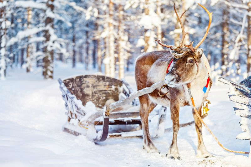 7-Day Finnish Lapland Winter Vacation from Rovaniemi