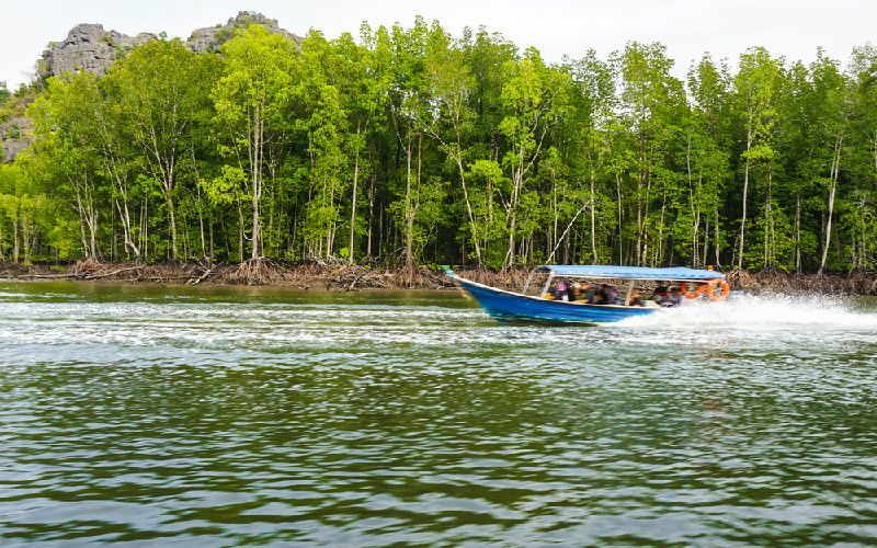 Langkawi Northern Mangrove Tours with Lunch