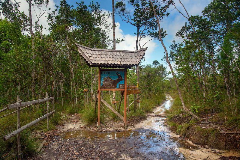 2-Day Bako National Park Tour from Kuching