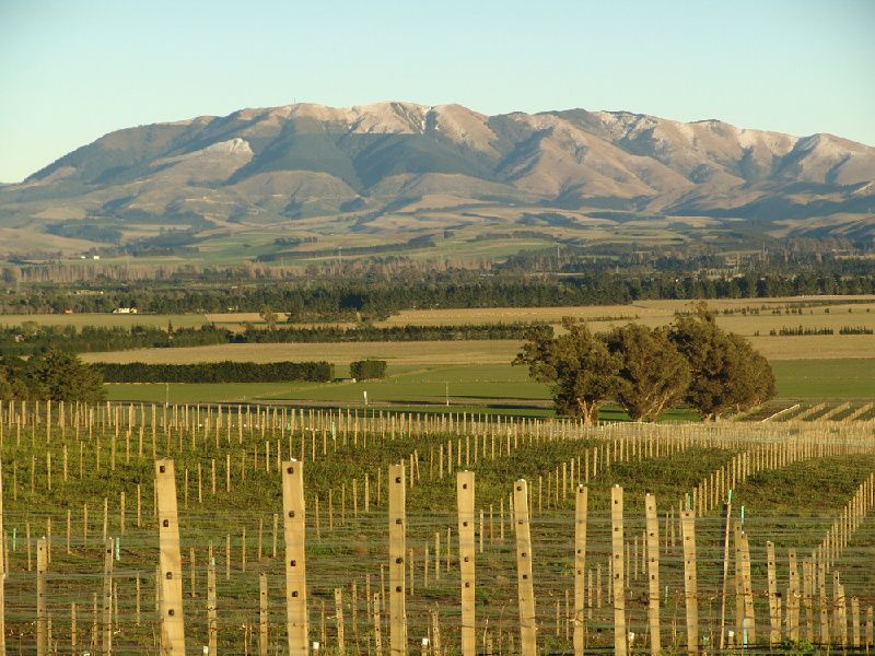 Waipara Wine Tour with Lunch