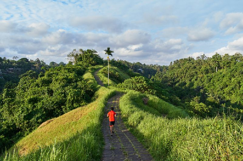 Private Bali Ubud Trekking Tour in the Ricefield