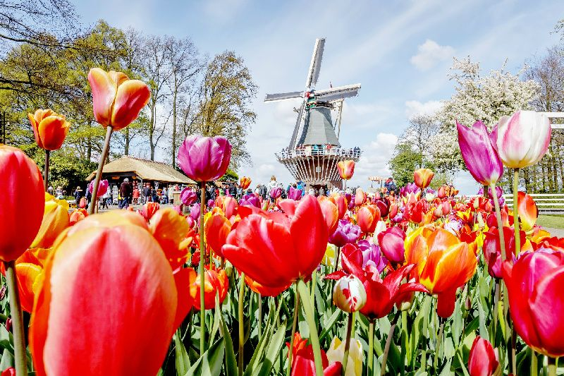 Volendam, Zaanse Schans Windmills, and Keukenhof Tour