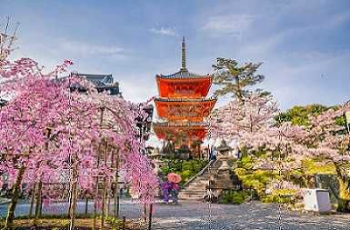 2019 8-Day Japan Golden Route Spring Tour