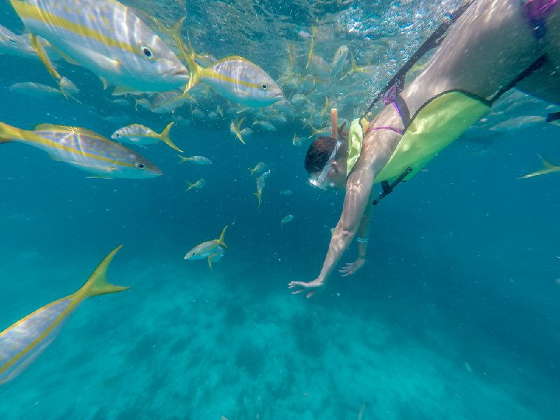 Key West's Snorkeling Afternoon Tour