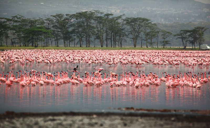 7-Day Kenya Deluxe Tour: Masai Mara National Reserve & Great Rift Valley