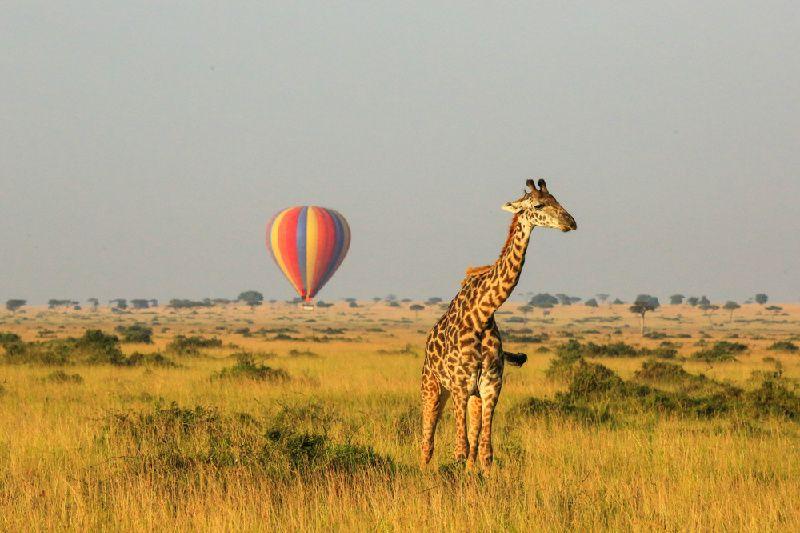 5-Day Kenya Deluxe Tour: Masai Mara National Reserve