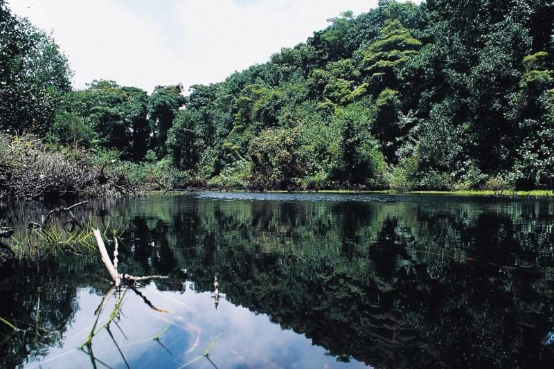 1-Day From San Jose - Tortuguero National Park