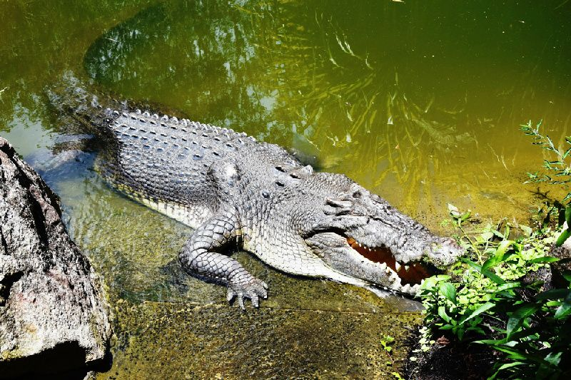 Afternoon Hartleys Crocodile Adventure From Cairns