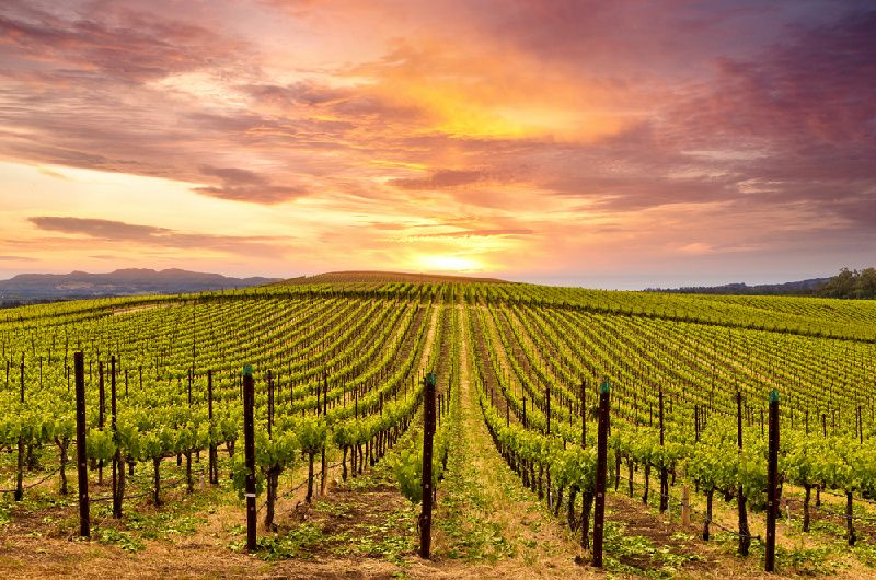 1-Day Napa Valley Tour