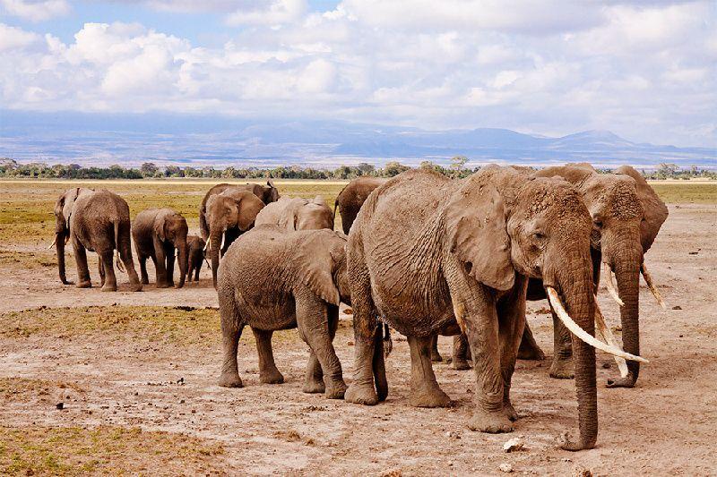 12-Day Kenya Explorer Safari - Nairobi