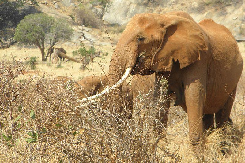 7-Day Big Five Safari - Mombasa