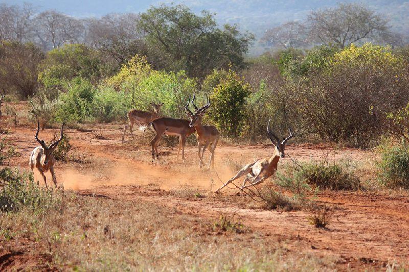 5-Day Wildlife Adventure  - Mombasa