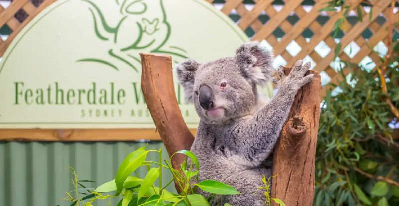1-Day Blue Mountains & Wildlife One-Day Tour from Sydney