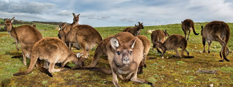2-Day Kangaroo Island Discovery Tour From Adelaide
