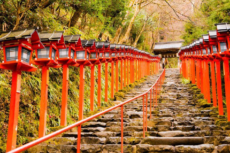 1-Day Kyoto Maple Lantern Illumination & Eizan Electric Railway Autumn Leaf Tunnel Walking Tour
