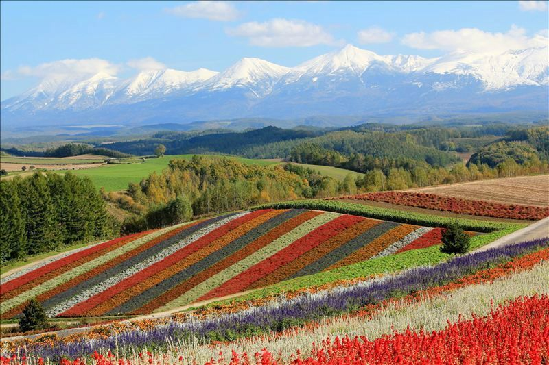 1-Day Autumn Leaves, Shikisai-no-Oka Flowers & Blue Pond Day Tour from Sapporo