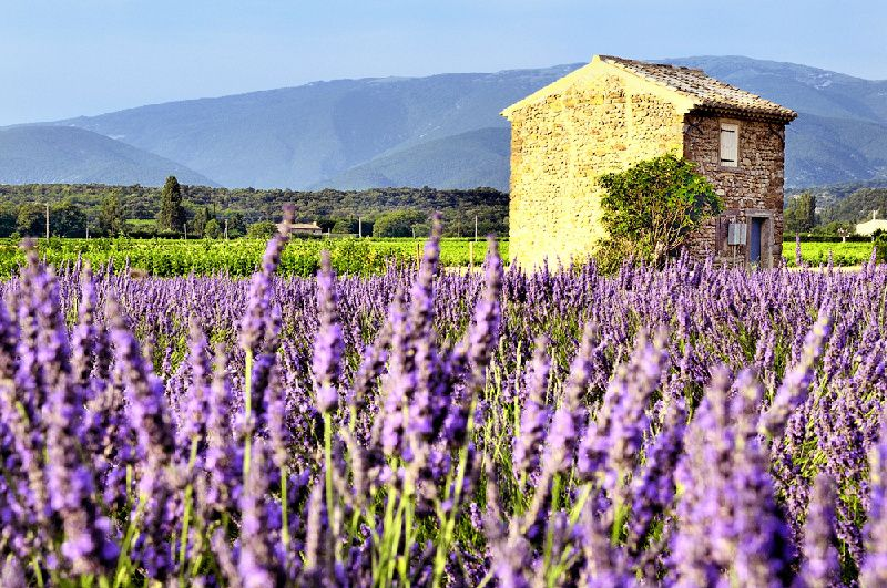 6-Day Burgundy and Provence Small Group Tour: Paris to Nice