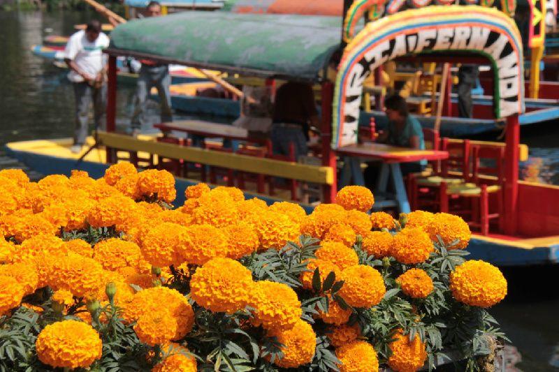 6-Day: Dia de Muertos Tour in Mexico City