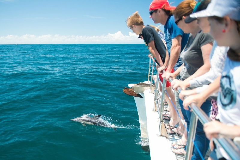 1.5-Hour Port Stephens Dolphin Cruise