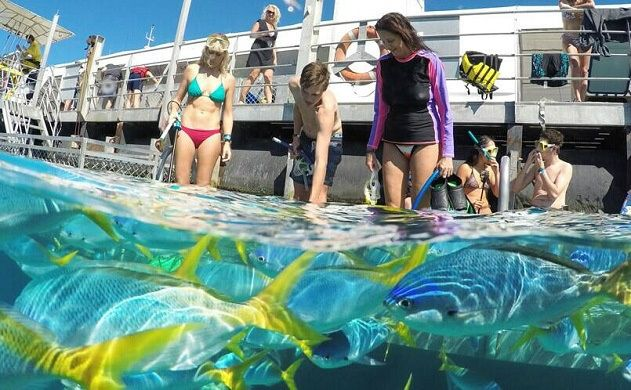 1-Day Sunlover Reef Cruise Outer Great Barrier Reef Depart from Cairns