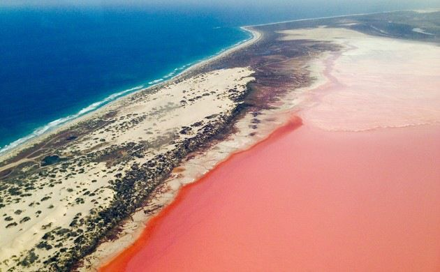 1-Day Pink Lake and Abrolhos Islands Tour from Geraldton