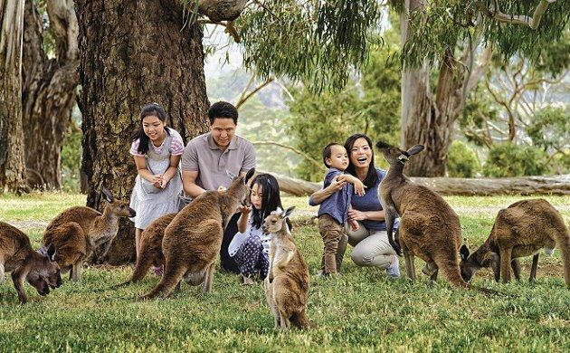 Half-Day Adelaide Cleland Wildlife Park Experience Tour