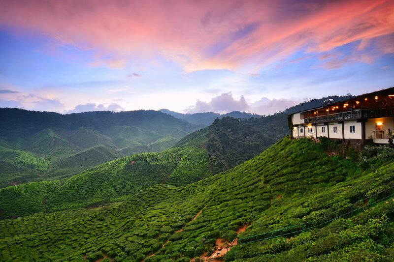 1-Day Private Nature Trip to Cameron Highlands from Kuala Lumpur