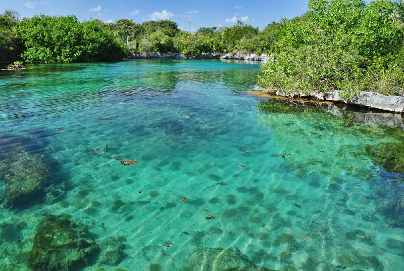 1-Day Xel - Ha Park Tour from Cancun or Riviera Maya