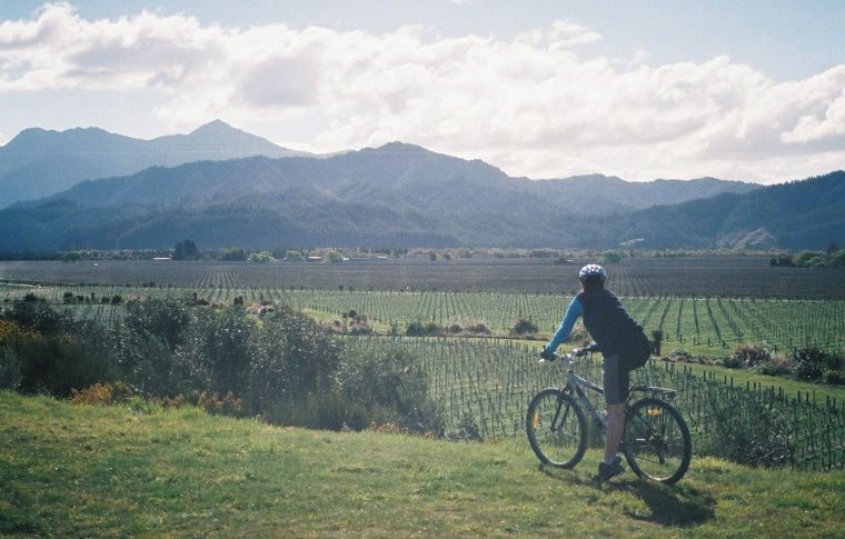 Marlborough Morning Guided with Afternoon Self-guided Bike & Wine Tour